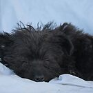 Finally a Nap! by Susan Blevins