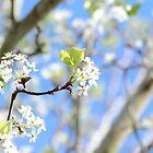 «Mi dia de primavera» de Olivia Plasencia