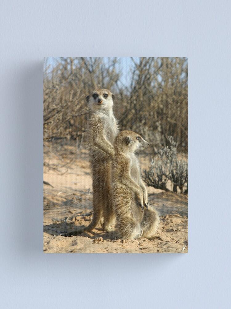 Alternate view of Kalahari meerkats Canvas Print