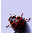 Little Lady Bug by Gozza