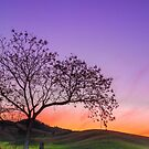 Sunset by the Gate - Gloucester NSW Australia by Beth  Wode
