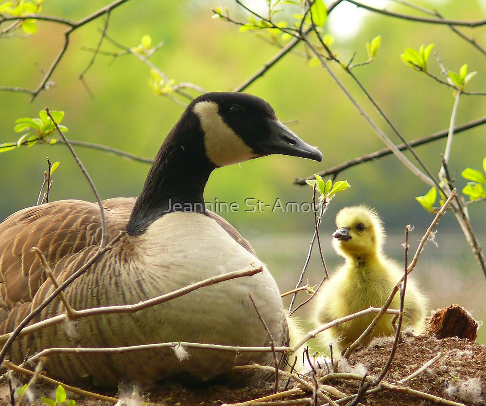 Look mommy! by Jeannine St-Amour