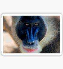 monkey looking right Sticker