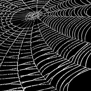 SPIDERWEB 2 by IMPACTEES