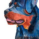 Rottweiler by doggyshop