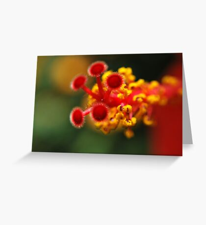 Gumamela Greeting Card