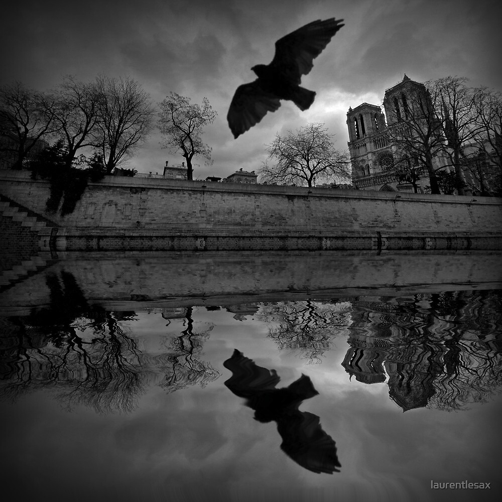 Pigeon and Notre-Dame by laurentlesax