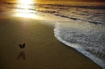 Butterfly on the sea by laurentlesax