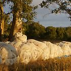 Nets in Repose - Magpie Springs - Adelaide Hills Wine Region - South Australia by MagpieSprings