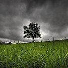Lonely tree by laurentlesax