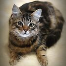 Pretty New Kitty by Barb Leopold