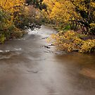 Ovens river - Bright by Tony Middleton