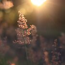 ..the sun will shine... by Cordelia