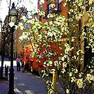 Beacon hill street scene by Dominique MEYNIER