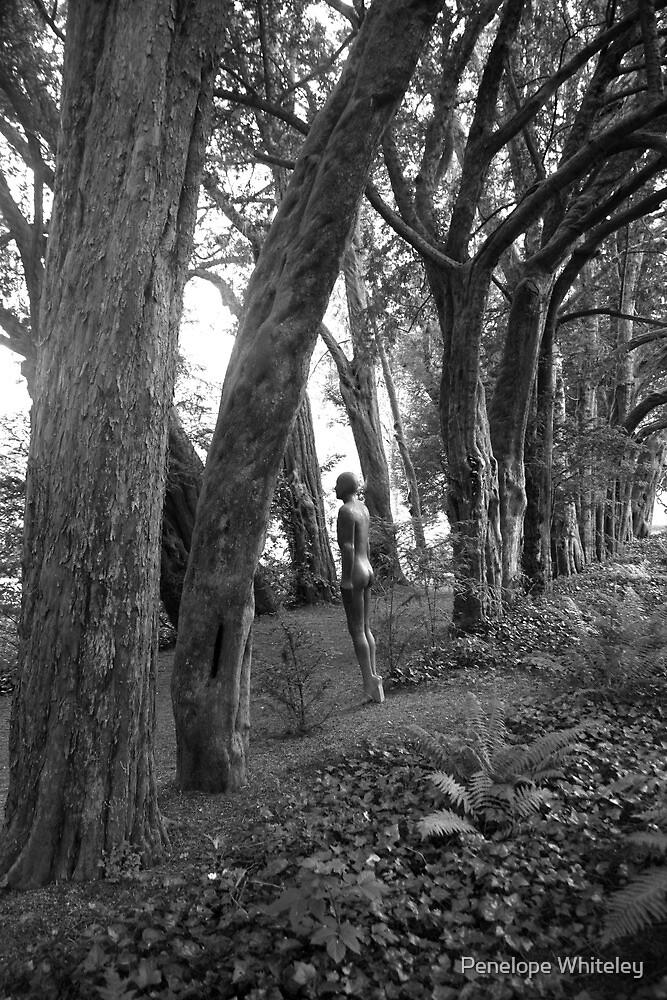 Men in Trees by Penelope Whiteley