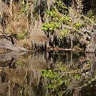 Baumreflexionen auf dem Florida-See von Zina Stromberg