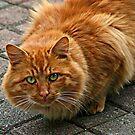 Wary Kitty by Monnie Ryan