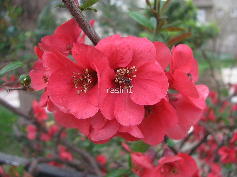 A beauty of Spring by rasim1