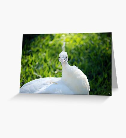 Close up and personal  Greeting Card
