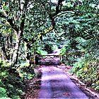Dartmoor Country Lane von Lesliebc