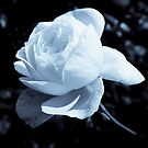 The Rose of Light by Nancy Stafford