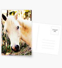 arab gelding Postcards