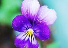 Vibrant Viola by Tori Snow