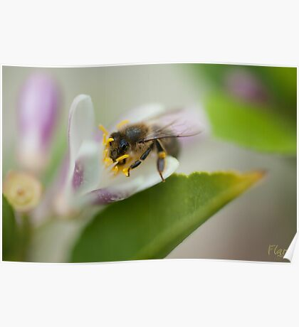 Bee Beautiful Poster
