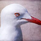 Seagull portrait by Louise  Bishop