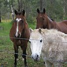 The Three Amigos. by Mywildscapepics