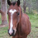 Equine Beauty. by Mywildscapepics