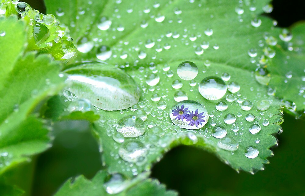 Spring droplets by walstraasart