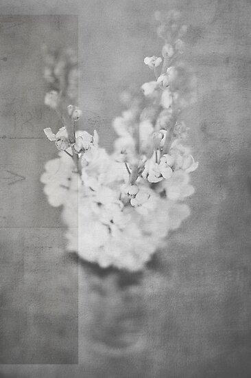 flores by Kim Jackman