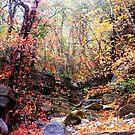 The Heart of Arizona's Mountains by Evgenia Attia