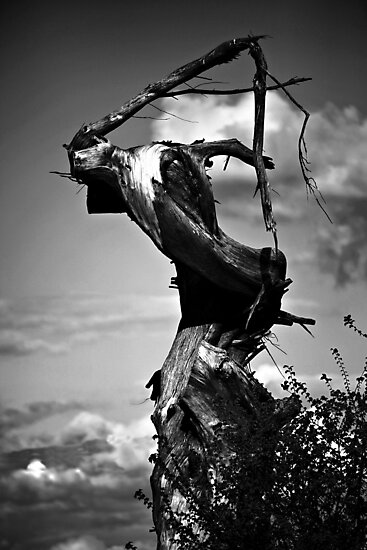 The Grim Reaper Tree by A90Six