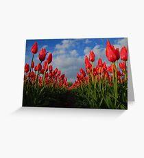 Tulips field Greeting Card