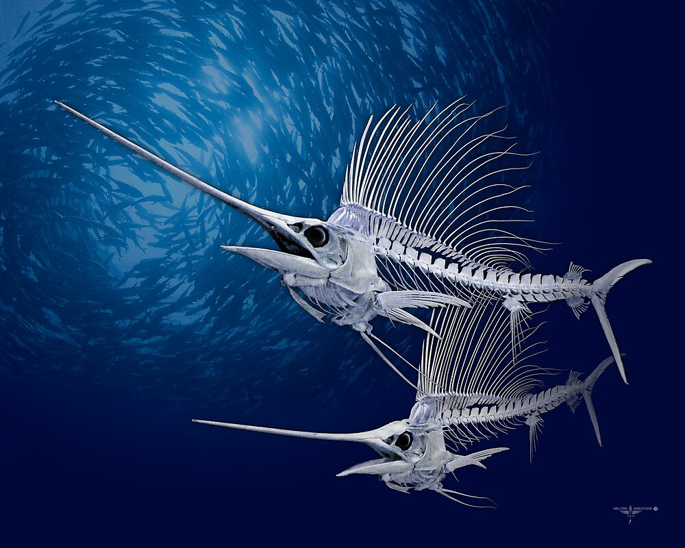 Quot Sailfish Quot By Helterskeletons Redbubble