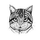 Cat by miarsmoller