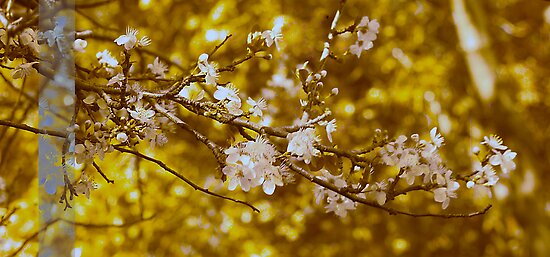 Blossoming Gold by Rebelle