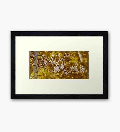 Blossoming Gold Framed Print