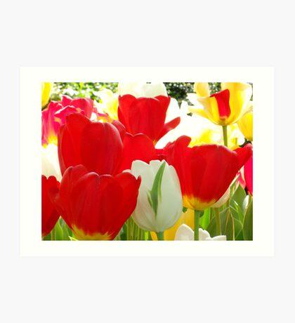 Gotta love Tulips Art Print
