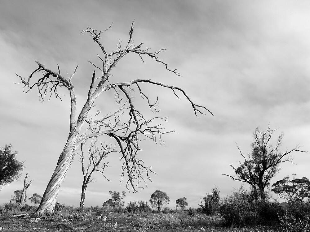 Bakara woodlands by jembot