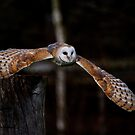 Barn Owl by ChromaticTouch