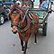 Horse pulling Cart or Carriage