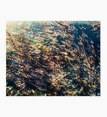 Rainbow Grass Four Photographic Print