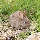 Bunny Wabbit by Gillen