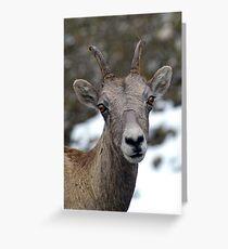 Posing Greeting Card