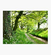 A Green Way Photographic Print