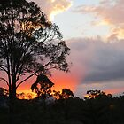 Scenic Rim  by Robyn Williams