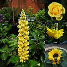 Frühlings- und Sommerblumen-Collage von BlueMoonRose